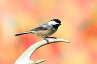 Bird On An Antler