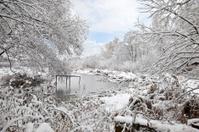 Brushwood on shore of the winter lake