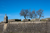 Trees behind the wall