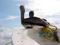 Gulls on a boat 2