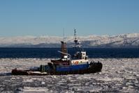 Tug boat pushing through ice