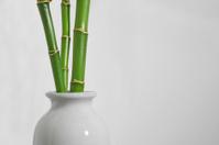 lukcy bamboo in vase