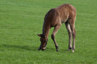 Foal Standing in Field
