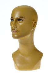 Male mannequin bust studio shot on white