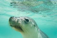 Portrait of a curious sea lion