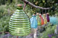 Glass wasp catchers