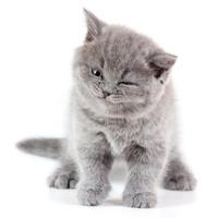 Winking Kitten