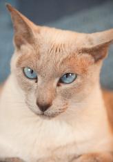 Old Blue Eyes Series