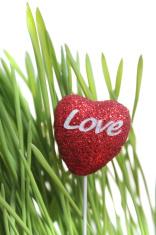 Green barley and love heart