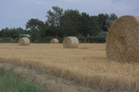 Bales of hay from the harvest
