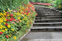 beautiful colourful flower garden