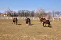 Horses in padock
