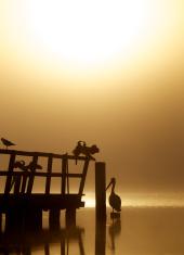 Birds in the sun and fog