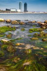 Seaweeds and skycrapers in Barcelona