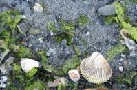 Sea life on the beach