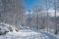 Norwegian winter road
