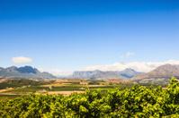 African Winelands Stellenbosch Cape Town Area