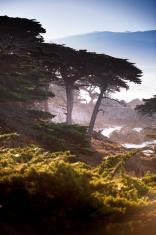 Cypress trees on the Big Sur, Coastline and sea