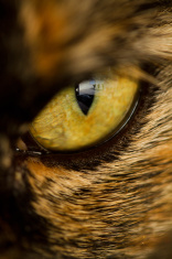 detail of cat's eye