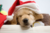 Sleeping Christmas Puppy