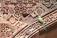 Parrot on the wall of Qutub Minar, New Delhi, India