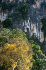 Yellow tree and cliff