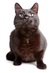Black cat on  a white backgroound