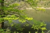 Pond of Tender green