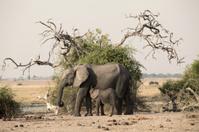 two elephants namibia