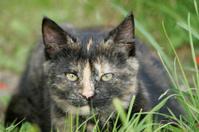 Cat Portrait #3