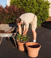 Senior man digging soil in wheelbarrow