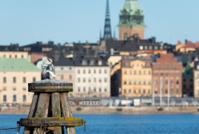 Herring gulls in front of Stockholm's Slussen