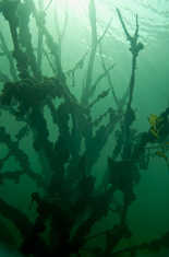 Sea grass in the deep