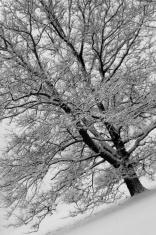 Winter at an angle B&W