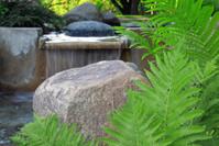 Fern in Water Garden