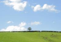 Landscape in spring - Green Planet