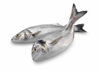 Sea Bass & Bream