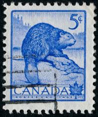 Beaver Stamp