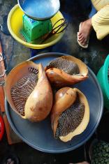 big mussels