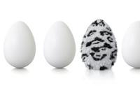 Egg with snow leopard fur between chicken eggs