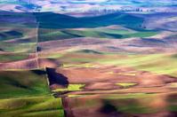 Wide Open Wheat Field