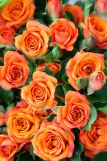 Apricot roses bouquet