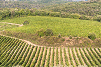 Chianti wine region, Tuscany.