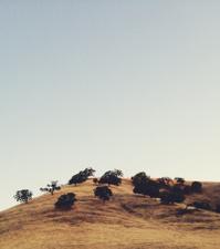 Oak Tree Hill
