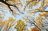 Autumn tree canopy. Outdoors.