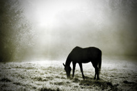 Horse at dawn in field with sun and mist