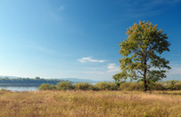 Lonely tree on the bank of river