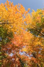 Color Overhead