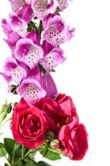 Digitalis and rose