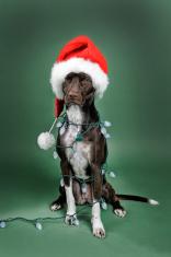 Dog wear Christmas Hat